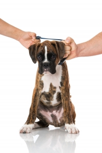 pets and divorce law